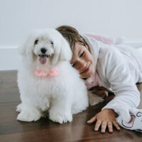 What Are The Essential Things For Your Dog?